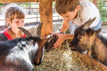 Cuidar animales